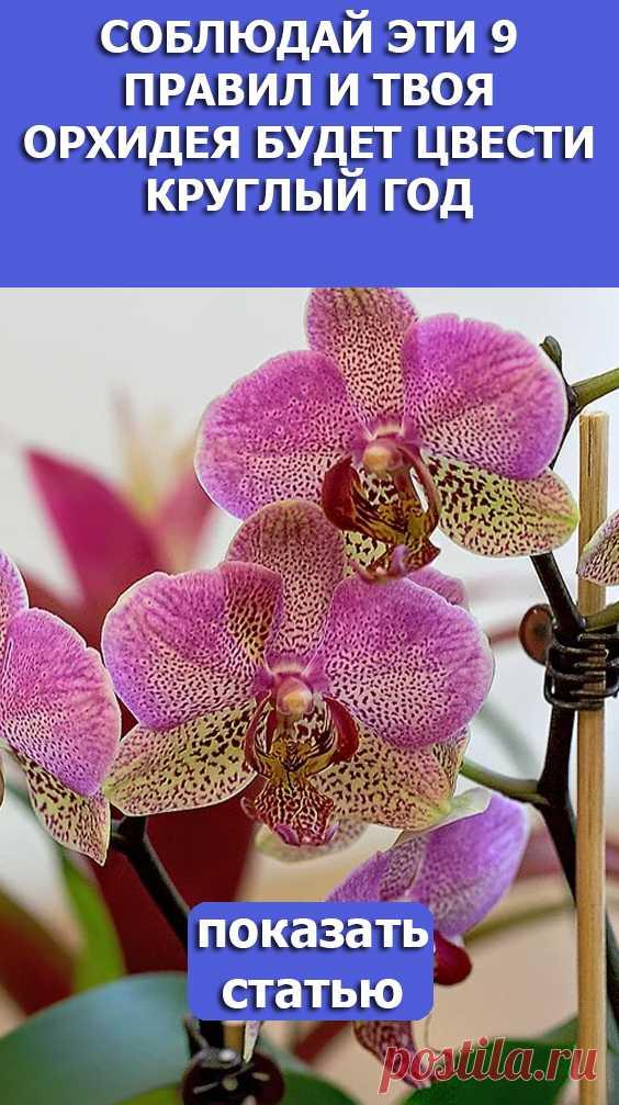Смотрите! Соблюдай эти 9 правил и твоя орхидея будет цвести круглый год