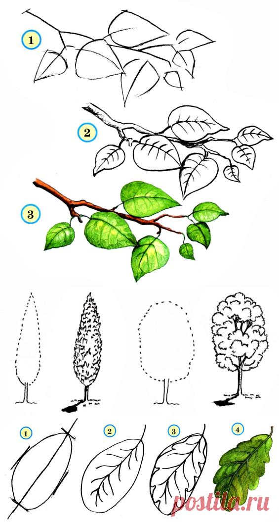 поисковых картинки веток разных деревьев выгоранием пикселей