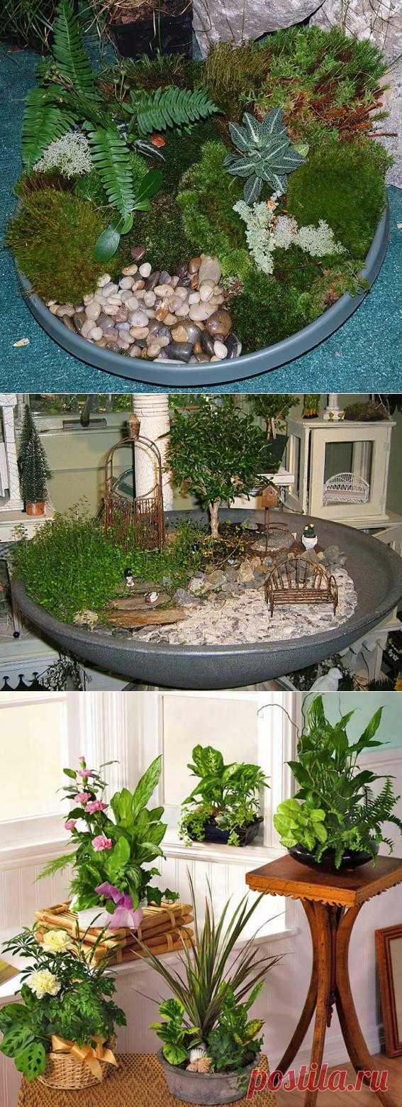 Мии-сад - комнатные цветы. Комментарии