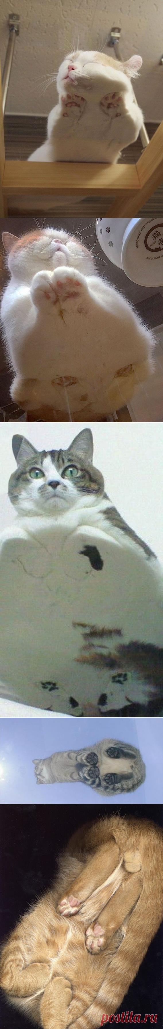Коты с необычного ракурса.