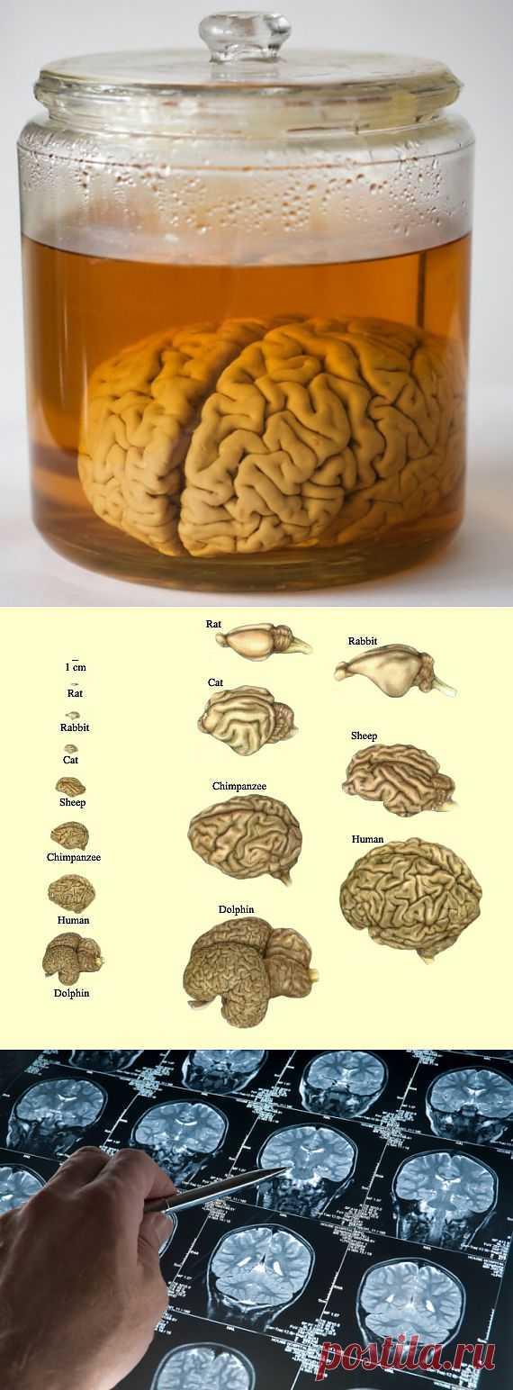 (+1) тема - 10 мифов о нашем мозге   НАУКА И ЖИЗНЬ
