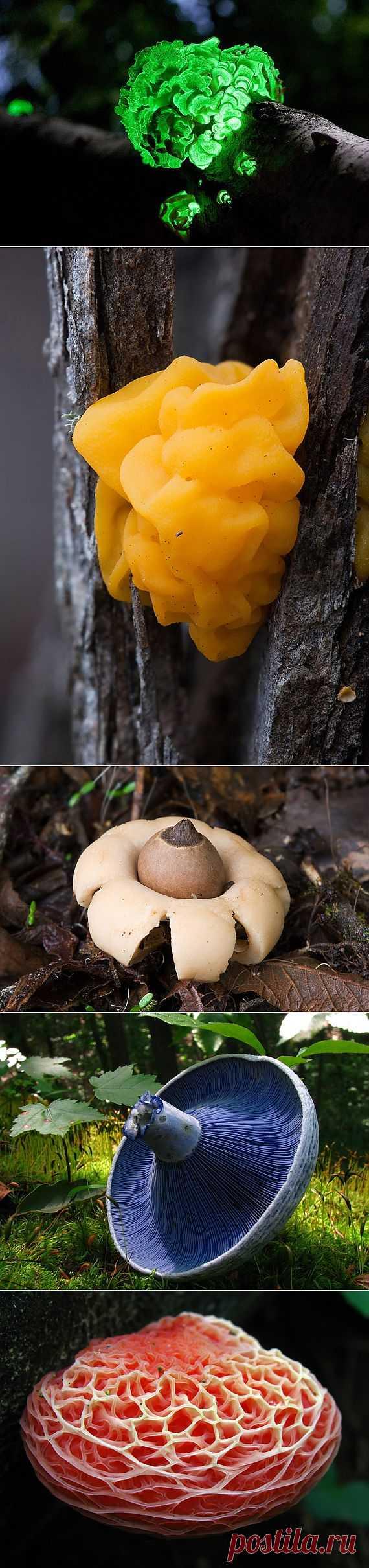 Самые красивые грибы в мире :  НОВОСТИ В ФОТОГРАФИЯХ