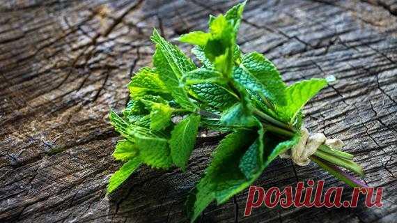Садовая мята: виды мят, особенности выращивания, секреты дачников на Supersadovnik.ru Мята - это не просто сорняк, от которого сложно избавиться, это прекрасное ароматическое и декоративное растение. Все виды мяты содержат эфирное масло, основной компонент которого ментол. Многие виды мят используются в кулинарии, медицине, фитотерапи