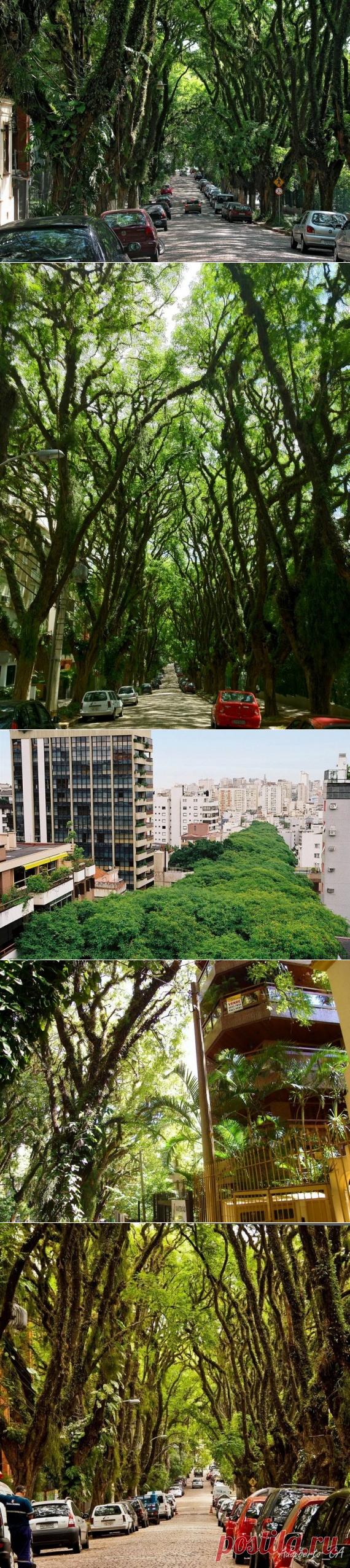 Руа-Гонсалу-де-Карвальо: официально самая красивая улица в мире / Туристический спутник