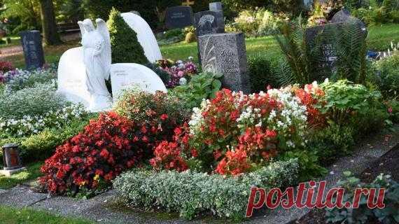 Что посадить на кладбище текст и фото на Supersadovnik.ru Хочется, чтобы место захоронения родных и близких выглядело красивым и ухоженным. В озеленении могил есть некоторые нюансы. Главный вопрос: что посадить?