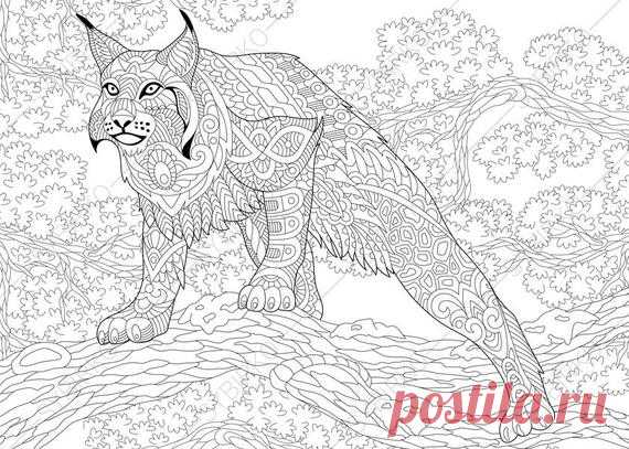 Wildcat Lynx Bobcat Caracal Coloring Pages Animal