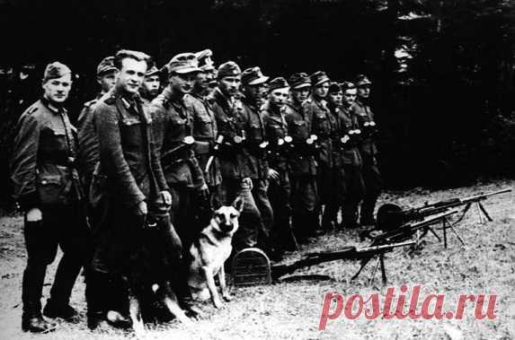 В мае 1945 года в Европе наступил мир. А пока жители СССР праздновали долгожданную победу в сташной войне, на территории Западной Украины орудовала мощная сеть украинских фашистов, которые вошли в историю как бандеровцы.