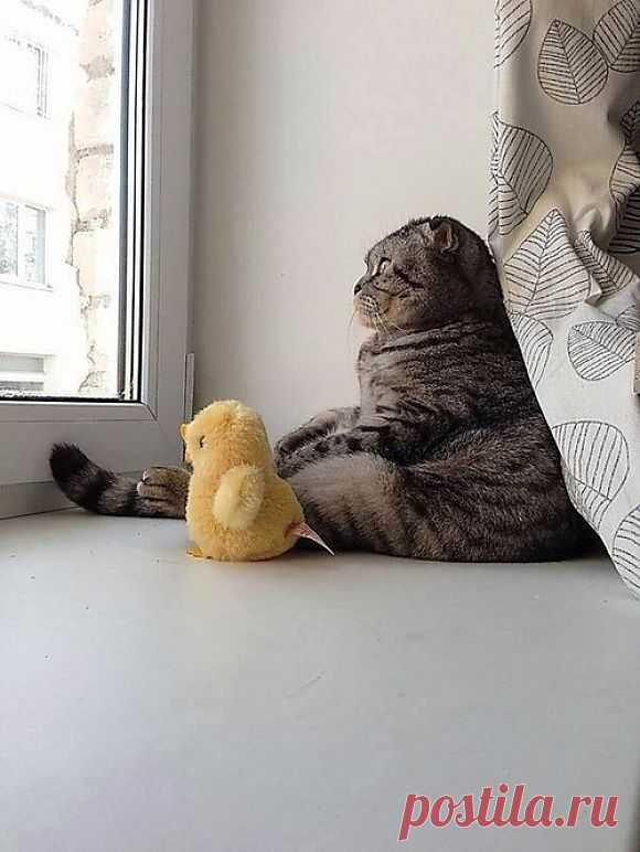 Soon We Will Escape Duckie | Cutest Paw