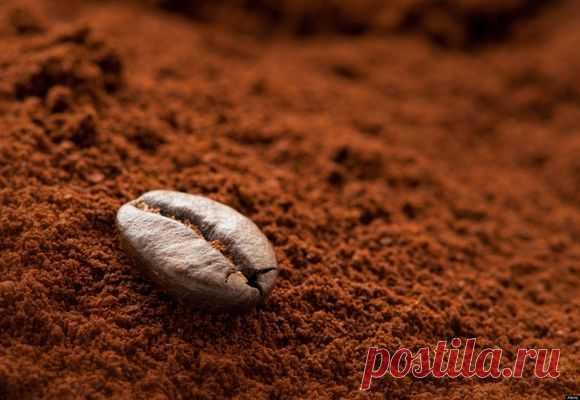 Кофейная гуща и кофе, как удобрение для комнатных растений
