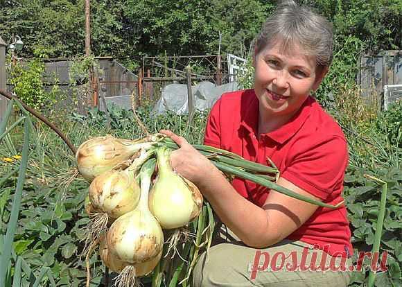 La carava femenina - los niños, las recetas, la belleza...))) | VKontakte