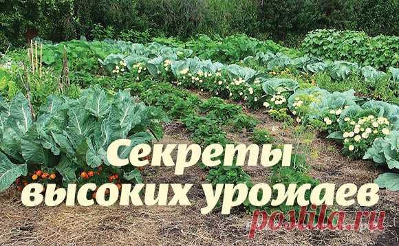 Los secretos de las altas cosechas
