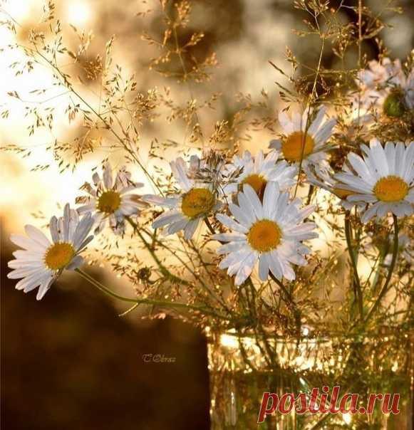 День засиял позолотой, До неприличия мил… Господи! Как хорошо-то! Так вот бы жил, да и жил…  © Анна Опарина