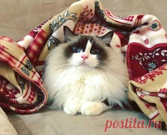 КотоОсень. Зарядитесь позитивом и улыбнитесь! )) | Мечтательная кошка | Яндекс Дзен