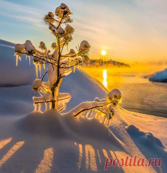 Small pines at dawn. Lake Ladoga, Karelia. The author of a photo is Fedor Lashkov: nat-geo.ru\/photo\/user\/27510\/