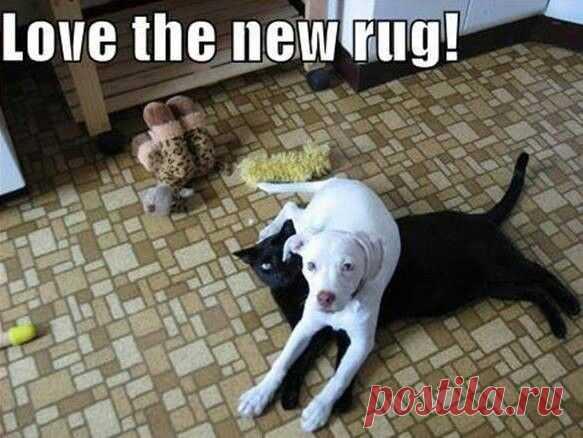 Мне нравится новый коврик! (перевод).  ---   #Dog #Humor | Humor
