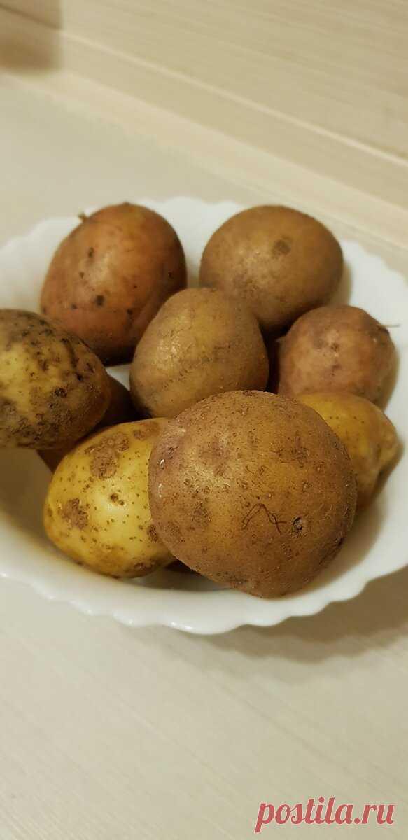 Приготовила легендарный картофель «по-канарски». Очень удивил сначала способ приготовления, а потом и вкус - Ваши любимые рецепты - медиаплатформа МирТесен