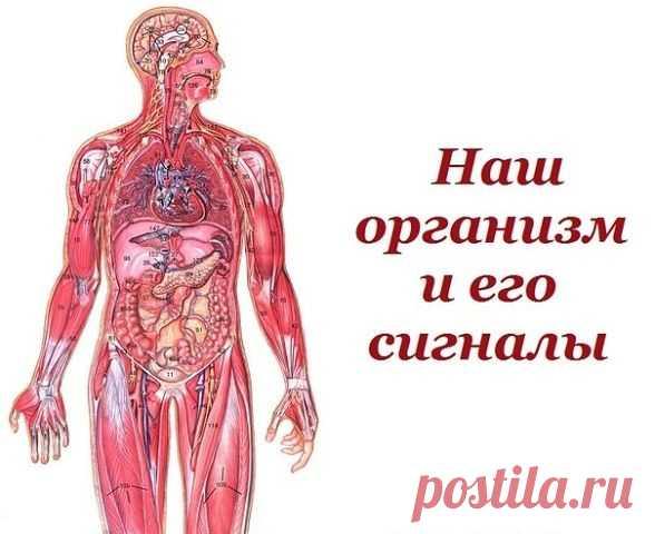 Наш организм и его сигналы.