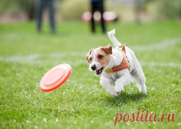 Как помочь собаке прожить более долгую и счастливую жизнь   PetTips