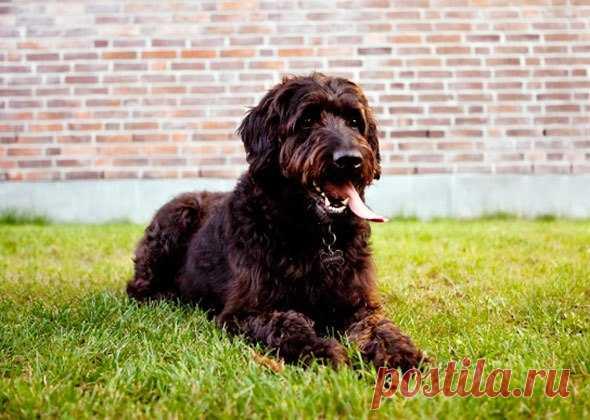 5 смешанных пород собак | PetTips