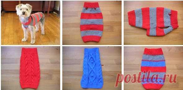вязание спицами для собак схемы вязаной одежды для собак буся и