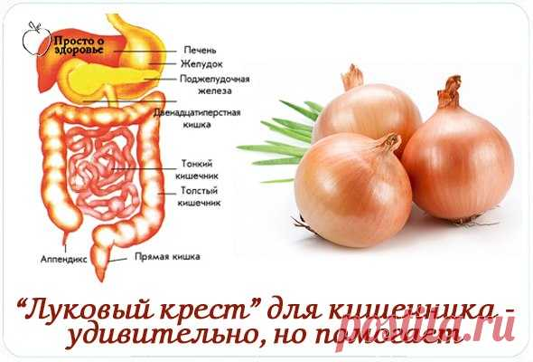 Onions cross — it is surprising, but helps From any discomfort with intestines well such means helps.\u000a\u000a\u000aIt is necessary to clear a napiform bulb and to cut it cross-wise, but not to the collum that it did not break up to parts. To put it in …
