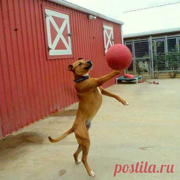 20 самых непосредственных фото собак, сделанных в нужный момент