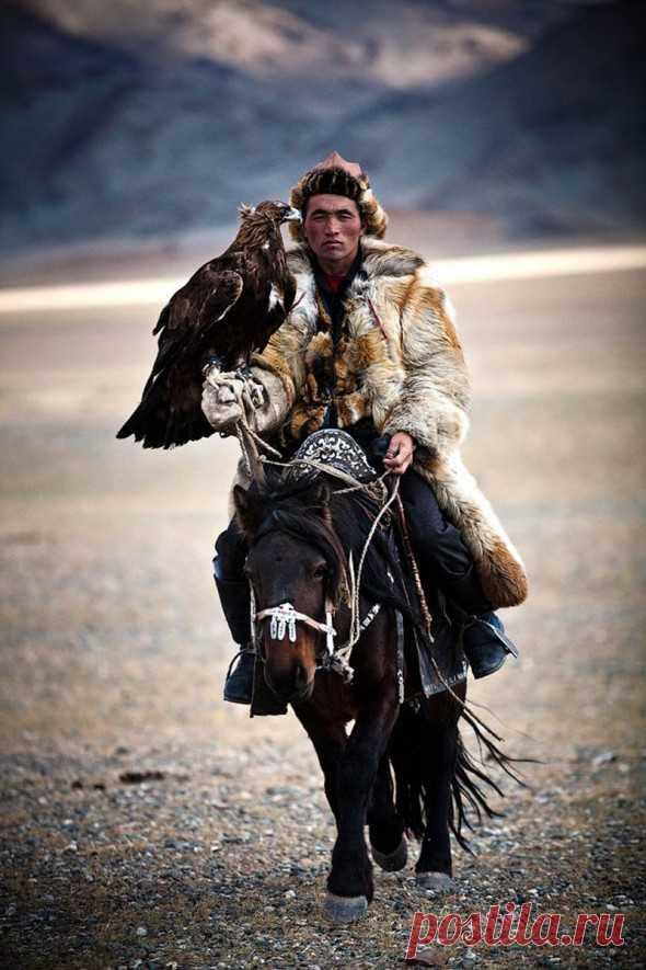 ¡Con las águilas, y no con los perros cazan en la Mongolia!
