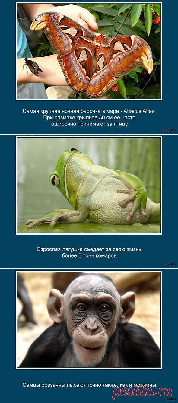 Знаете ли вы, что муравьи никогда не спят? Еще много других очень интересных фактов о животных в картинках.