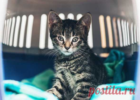 7 секретов, как сделать счастливой свою кошку   PetTips