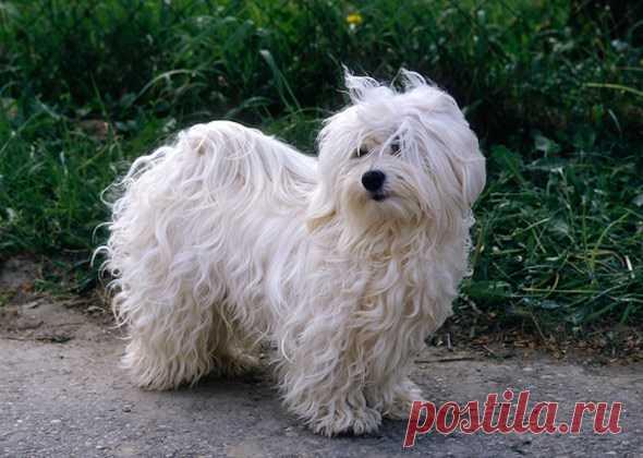 10 лучших маленьких пород собак для новичка   PetTips
