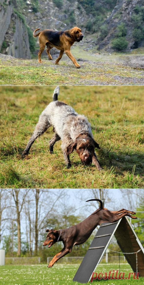 8 пород собак, которые любят долго гулять | PetTips