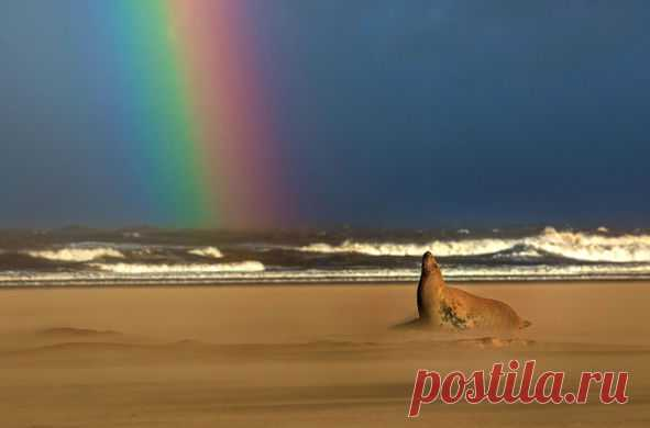 #фотодня Тюлень любуется радугой.
