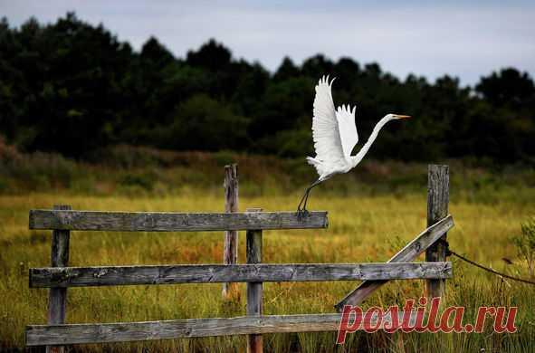 Фото дня. Цапля в штате Мэриленд, США.