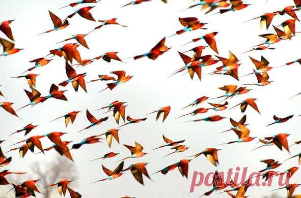 #Фотодня Кто скажет, что это за птицы?