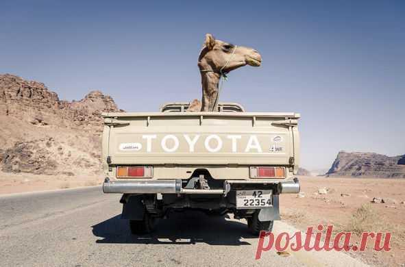 Перевозка верблюда в Иордании. Примечание редакции: с верблюдом все хорошо