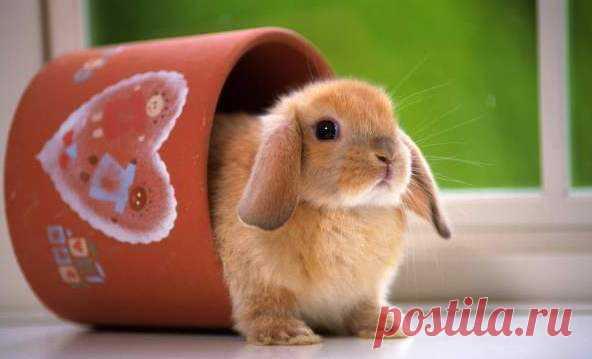 Чем заец отличается от кролика? Заяц от кролика отличается размерам и повадками. Породы домашних кроликов произошли от дикого европейского предка. Вес зайца-беляк  3-5,5 кг, русака — 4-7 кг, а дикий кролик весит 1,6-2,5 кг (хотя домашние весят до 10 кг). Лапы и уши у кроликов короче, чем у зайцев.