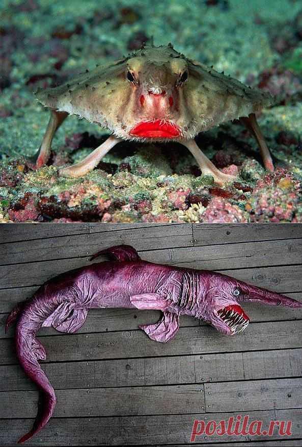 Картинки самое страшное животное на земле