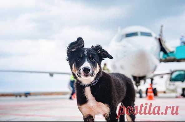 На Инстаграм собаки подписано более 2000 человек
