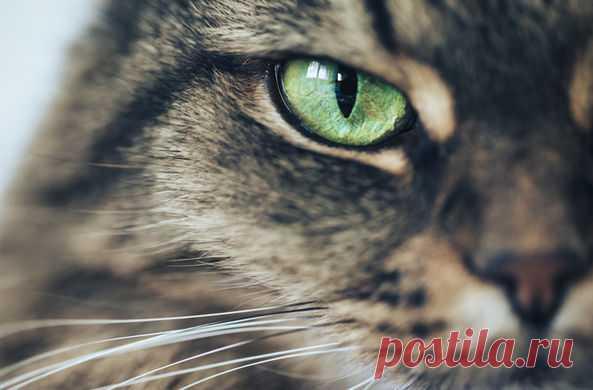 Во Владивостоке кошка взяла на воспитание троих новорожденных енотов