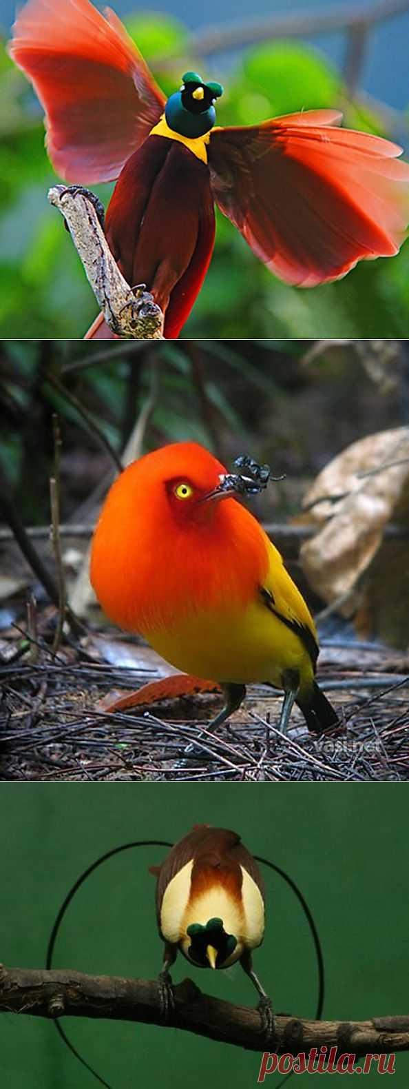 Райские птички - Фото - Калейдоскоп Эмоций