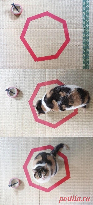 Гдз поймай кота