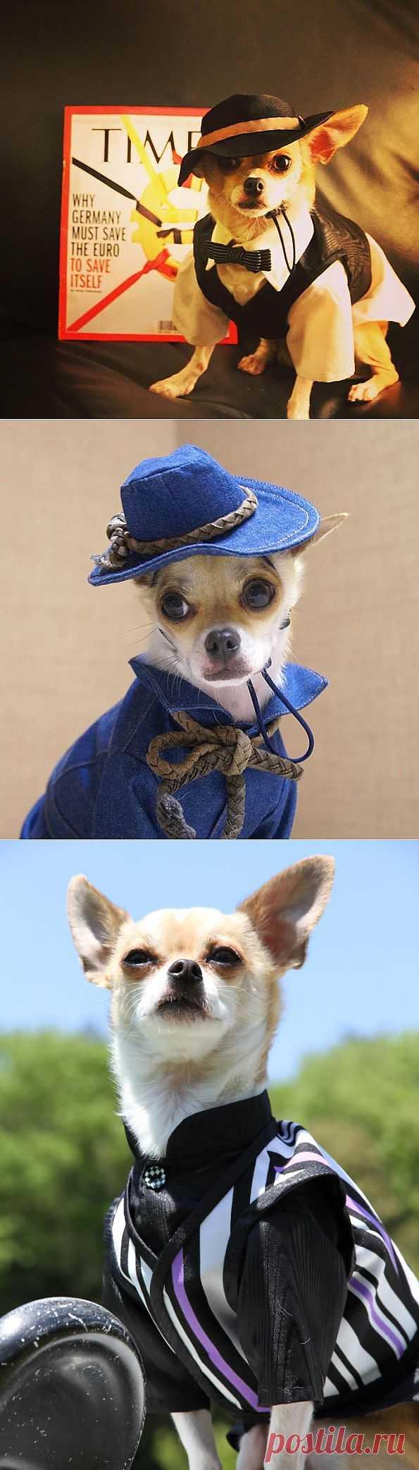 Самые модные собаки | Живой фотоблог
