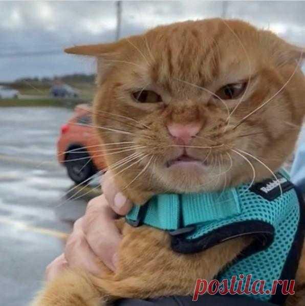 Вместо тысячи слов: коту Тыковке не понравилось на пляже, и вся гамма эмоций отразилась на рыжей морде — 4 Лапки
