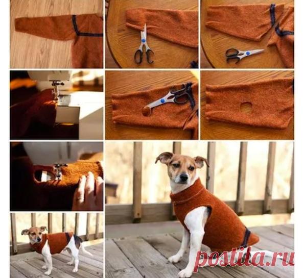 Свитерок для пса DIY
