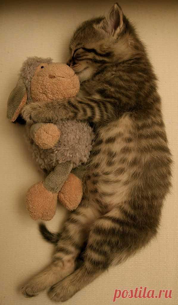 sleeping beauty | Flickr - Photo Sharing!