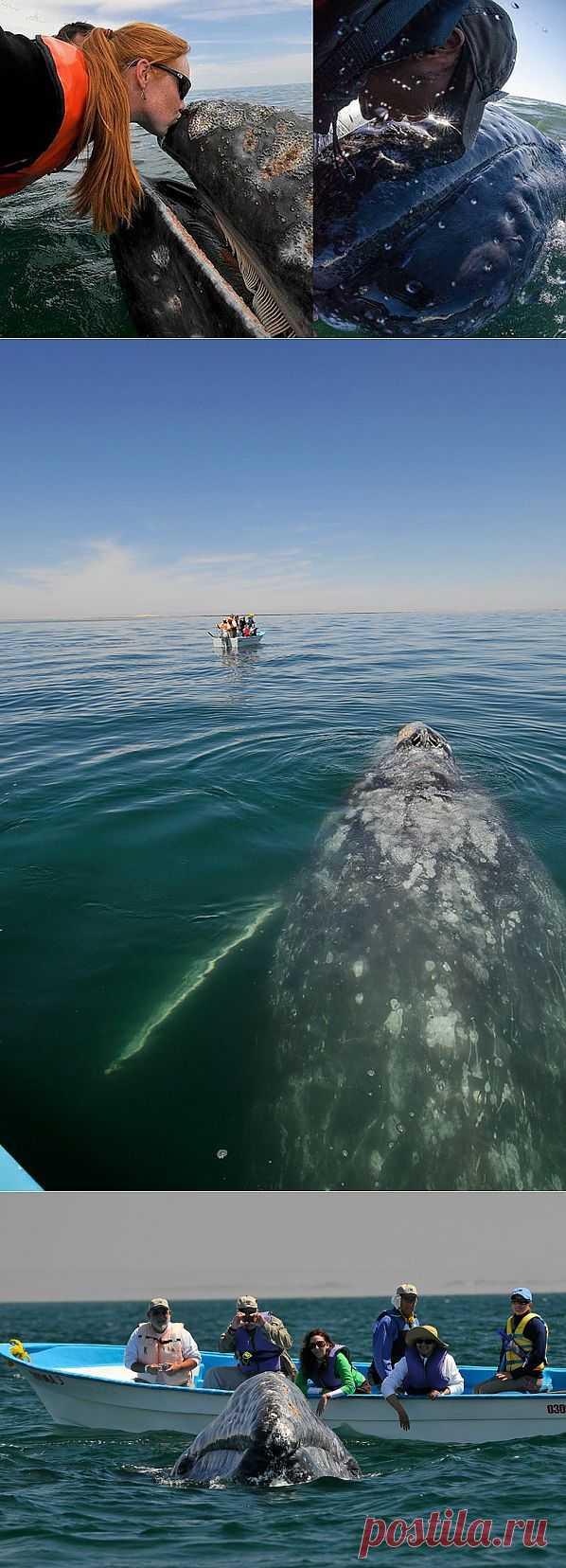 Поцеловаться с китом : НОВОСТИ В ФОТОГРАФИЯХ