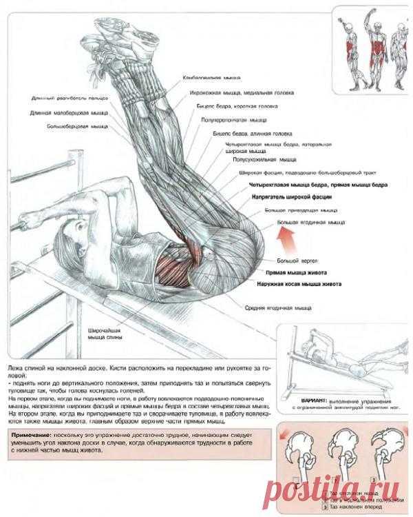 ПРЕСС. Подъем ног, лежа на наклонной скамье. Основная цель данного упражнения – это проработка мышечного комплекса нижней части живота и мышц-сгибателей тазобедренного сустава.