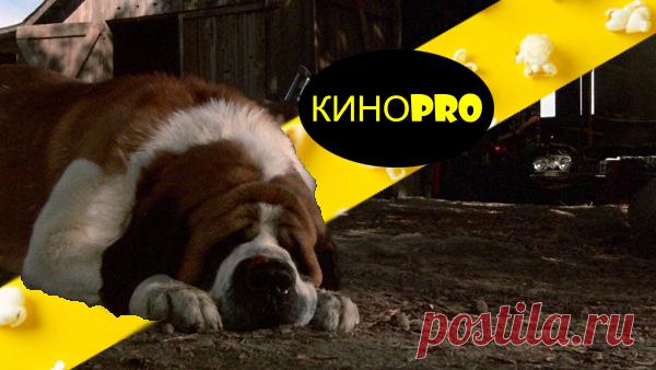 3 фильма, которые не стоит смотреть перед сном   КИНОPRO   Яндекс Дзен