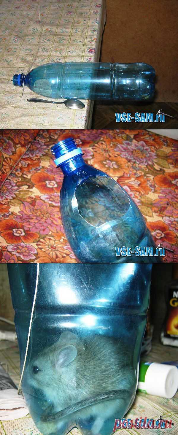 Мышеловка своими руками из пластиковой бутылки.
