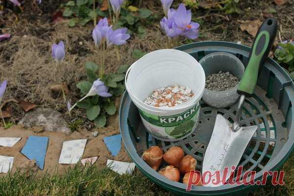 Как посадить тюльпаны с защитой от мышей (учитесь на моих ошибках) | Есть время под солнцем | Яндекс Дзен